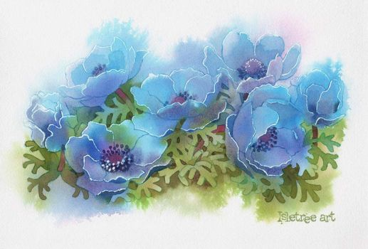 Blue anemone flowers by isletree