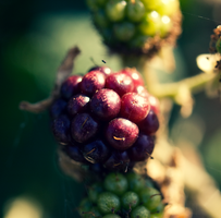 Mixed Berries. by 48photography
