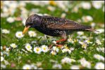 In Amongst The Daisies. by andy-j-s
