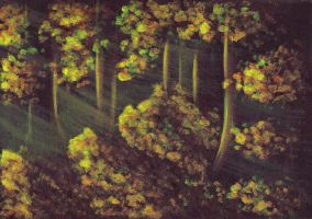Sunlit Forest by letmeusemyname