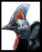 -cassowary- by EatToast