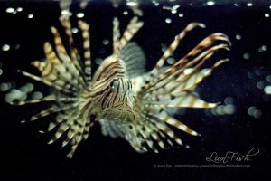 LionFish by JeanFan