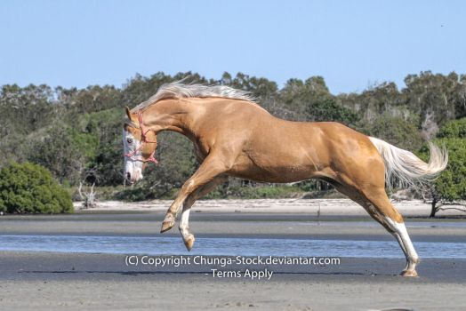 H Palomino rear launch buck white face blue eyes by Chunga-Stock