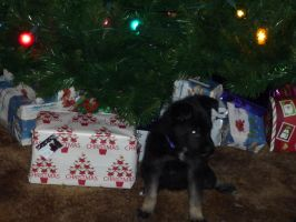 Puppy's first Christmas by MoonStar18