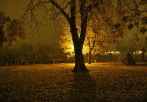 silence of the night II by Lk-Photography