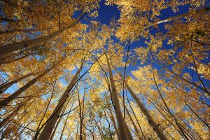 Aspen Colors by porbital