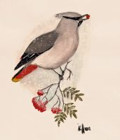 Waxwing in the snowfall by Wolverica