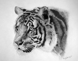 Tiger - 2010 by TheKatling