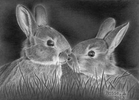 Rabbits by Torsk1