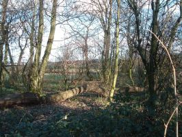 Copse stock 12 by RobynSmaleBeorg