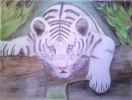 Baby white tiger by Anarloth