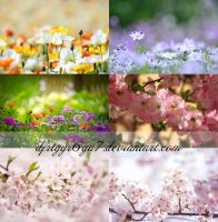 Pack flowers stock-2 by dfrtgyr6yu7