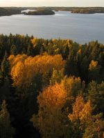 Trees of gold by Wolverica