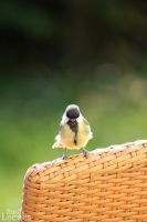 great tit II by EmisBakery