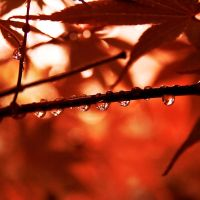 Autumn drops. by inbrainstorm