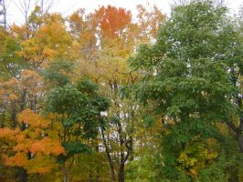 Canadian Fall Colours 43 by Aswang301