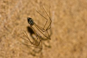 spider in the cupboard 6 by speed-demon