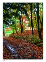 Fall by Marcello-Paoli