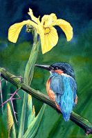 Kingfisher by Ezeg