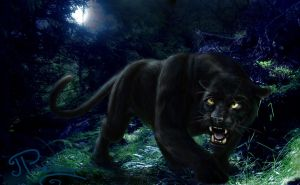 Black Panther in Forest by sayjinlink