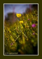 Spring Flowers 2 by kayaksailor