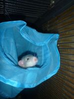 Rat in a tunnel by usedbooks