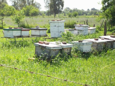 Apiary by Criss23