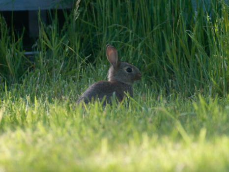 rabbit at camp by wob86