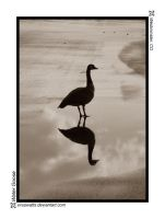 Water Goose by viruswatts
