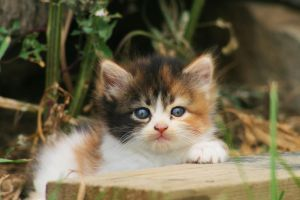 Kitten by SpiffyPhotography