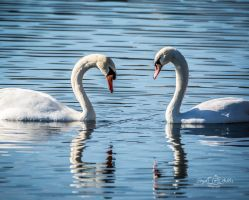 Romancing the Swan by StephGabler