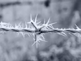 Nature enhanced barbed wire by Astroandre