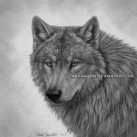 Wolf Premade for SALE + example by makangeni