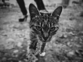 The cat 2 by EvgeniaSummer