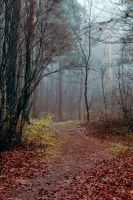 Mist in the Forest VIII by NorthernLand