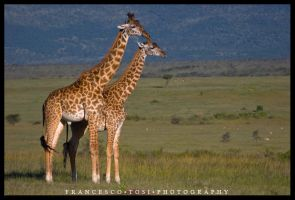Kenya Wildlife 150 by francescotosi