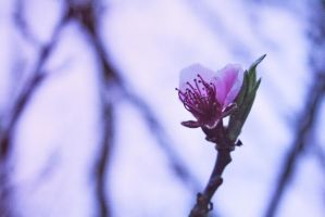 - Spring time 4 by Mme-Oui