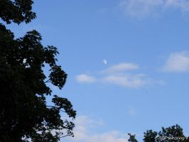 Tree, Sky and the Moon by Witchling-V