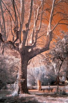 Magical tree - Infrared by Chaton75