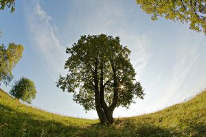 Summer tree I by Sulde
