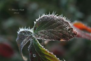 Frosted Edges by Roses-to-Ashes