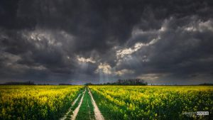 The colza field and cloudy sun by NorbertKocsis