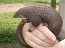Tree Pangolin by lonelynightrain