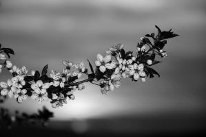 054-1bw by Placi1