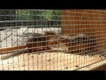 Incarcerated Rodents by todd587