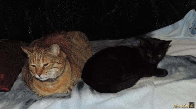 Micia and Blacky 1 by MiciaCat