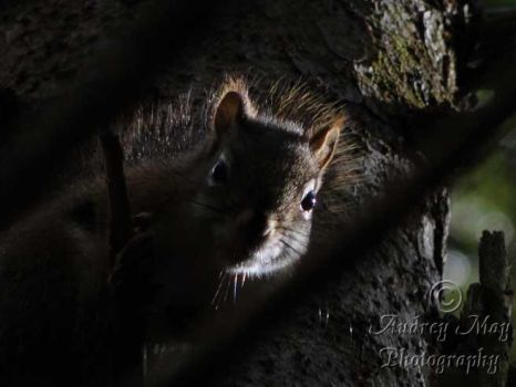 Moody Squirrel by AudreyMayPhotography