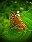 Butterfly... by Erylum
