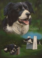 Monty - Border collie portrait by Canis-Lupess