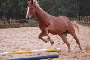 TB leaping at cam - blurred by Chunga-Stock